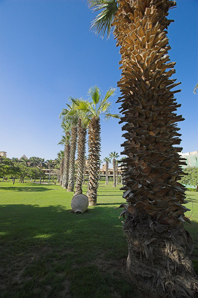The Mena House Oberoi<br /> Palms