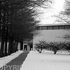 Cypress trees at Tarble Arts Center, Eastern Illinois University at Charleston, IL