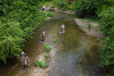 Kickapoo Creek Restoration