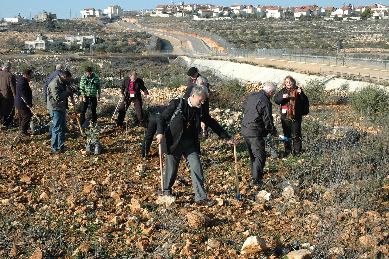 North American Lutheran bishops plant olive trees at Beddo, West Bank, Jan. 12.  Bishop Julian Gordy, ELCA Southeastern Synod, is in the center.