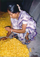 A woman sorts piles of naturally golden silk cocoons.