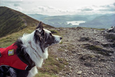 Cassie On Ullock Pike Summit.