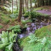 In the Whinlatter Forest