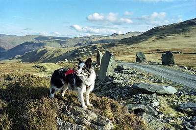 Fleetwith Pike : Cassie by the Honister Mine road