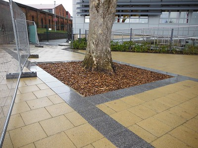No dig construction was required around this mature London Plane tree to accommodate new paving.