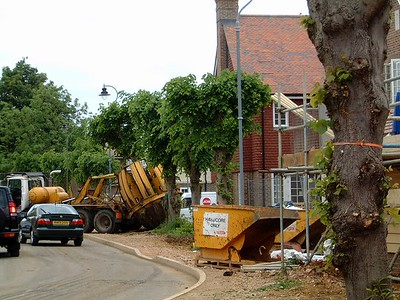 Trees being relocated and re-establishing as part of the street scene.