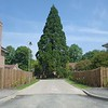 The semi mature Sequoia tree acting as a roundabout feature,  with surfaces designed using no dig construction to avoid root damage.