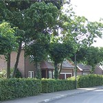 Trees relocated and re-established after 5 years, with boundary hedge offering scale and maturity to the street scene.