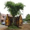 ELD Tree Movnig jpg (6)