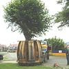 ELD Tree Movnig jpg (4)