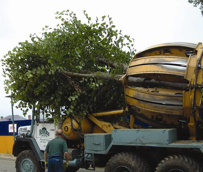 ELD Tree Moving