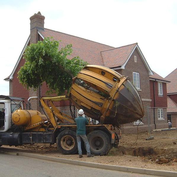 ELD Tree Movnig jpg (7)
