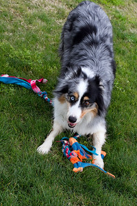 Get that toy!