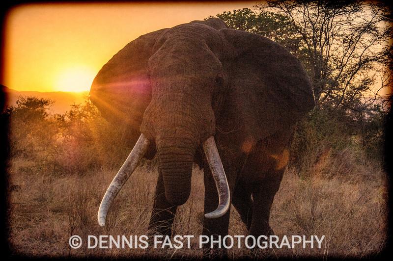 DRF ELEPHANT 011.jpg