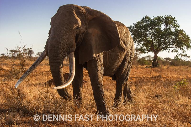 DRF ELEPHANT 010.jpg