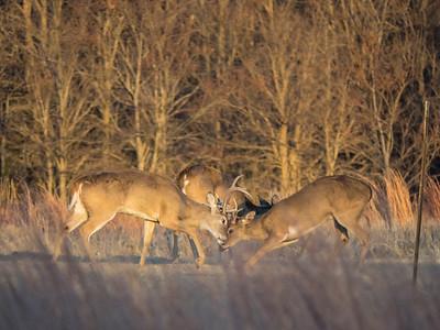 EM1 100-300 Deer Feb 2015