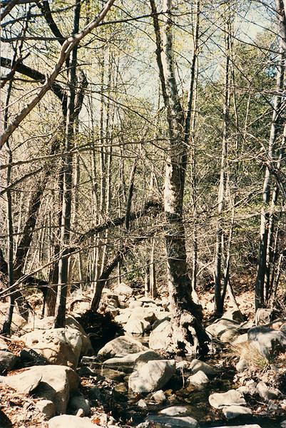 Headwaters, Santa Ynez River. April, 1984.