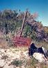 Lost Valley Trail marker to Hurricane Deck, 26 Mar, 1988.