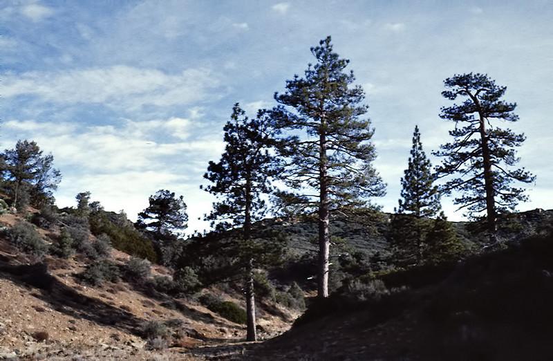 Mission Pine Basin, 01/1984