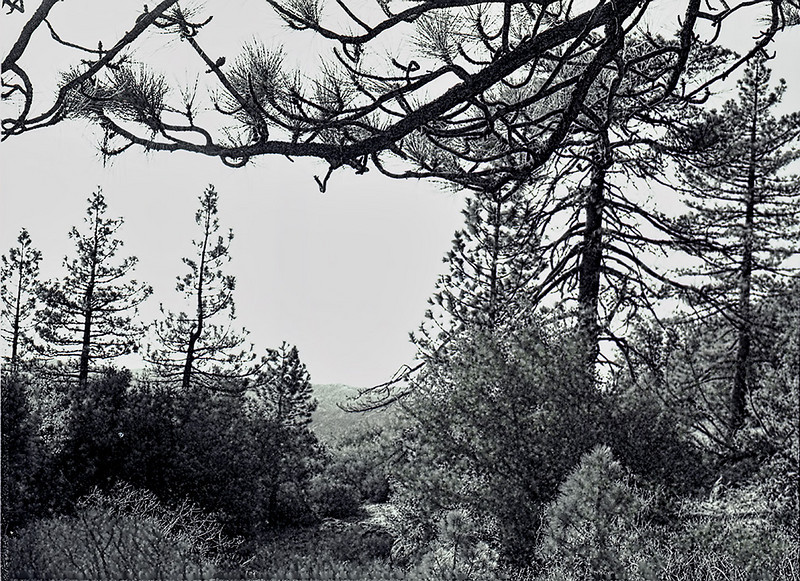 View through the trees from Chorro Spring camp, 1981.