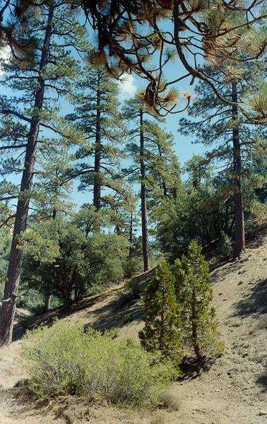 Pine Mountain Lodge camp, 1983.