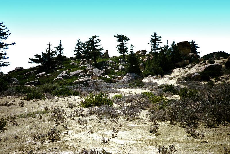 The rock garden on Santa Ynez ridge just east of Divide Peak, April, 1984.