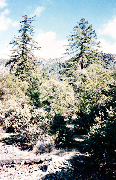 Path into Cienega Camp from creek, 01/1985