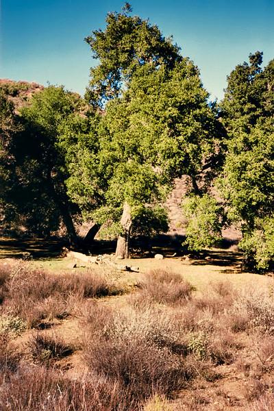 Ant Camp, Agua Blanca Creek, 01/1985