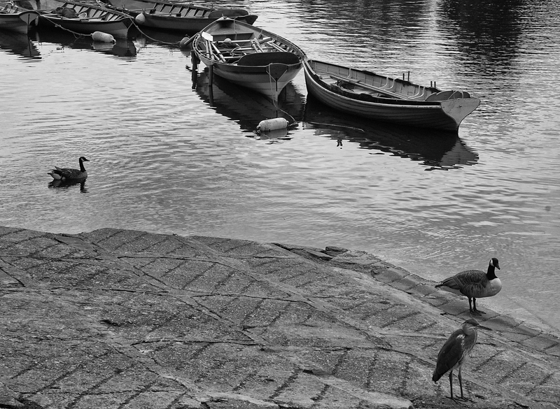 Boats & Fowl (2) - Richmond, London (May 2015)