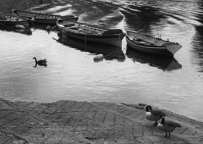 Boats & Fowl (1) - Richmond, London (May 2015)