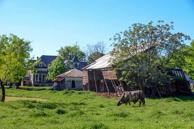 FARMHOUSE BARN AND COW