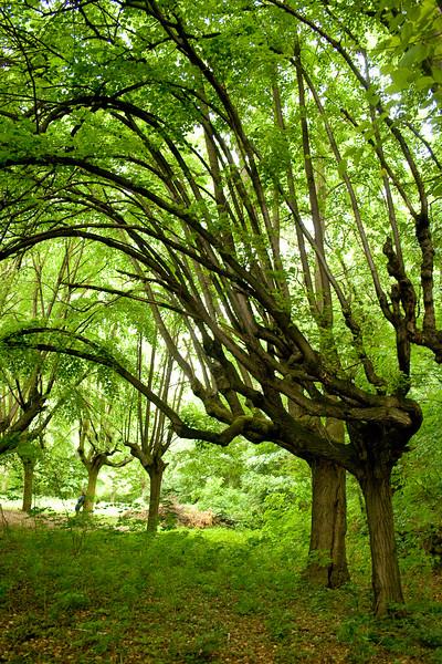 Zvláštně rostlé stromy poblíž v parku