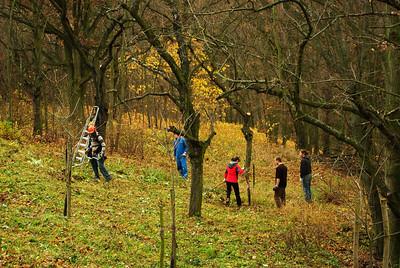 Veveří - podzim 2010