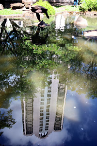 Milton Hee : A reflection in a pond near Indigo restaurant provides an interesting portrait