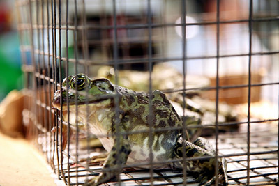 """This frog was angry,"" Hee says of the unlucky caged critter, that was soon to be someone's dinner.   Photographer: Milton Hee   http://miltonhee.smugmug.com/"
