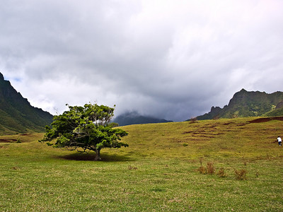 Lone Tree  ...  Ross Hamamura, www.RDHphoto.net