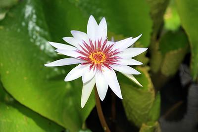 Milton Hee  Flowers / Waimea 2007