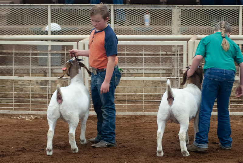 20190105_eosc_goats_showmanship-and-does438
