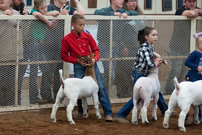 20190105_eosc_goats_showmanship-and-does433