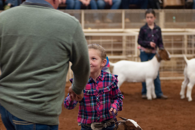 20190105_eosc_goats_showmanship-and-does451