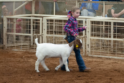 20190105_eosc_goats_showmanship-and-does444
