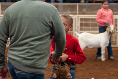 20190105_eosc_goats_showmanship-and-does450
