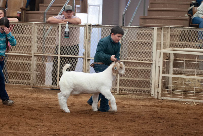 20190105_eosc_goats_showmanship-and-does452