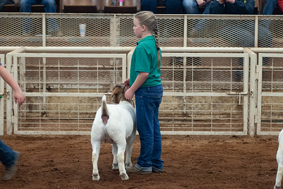 20190105_eosc_goats_showmanship-and-does440