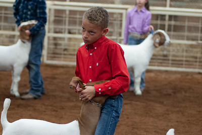 20190105_eosc_goats_showmanship-and-does448