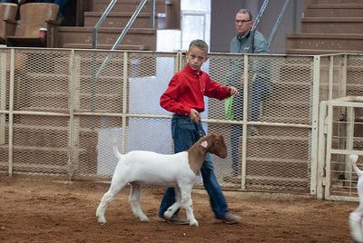 20190105_eosc_goats_showmanship-and-does443