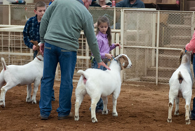 20190105_eosc_goats_showmanship-and-does436