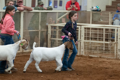20190105_eosc_goats_showmanship-and-does445