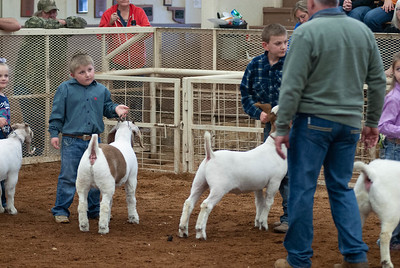 20190105_eosc_goats_showmanship-and-does435