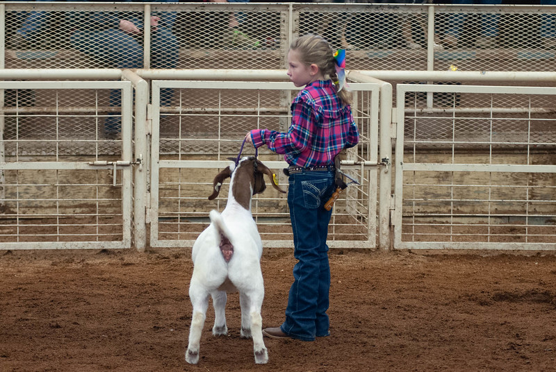 20190105_eosc_goats_showmanship-and-does439